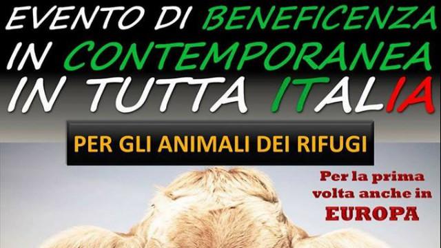 evento-di-beneficenza-per-gli-animali-dei-rifugi-foto-copertina